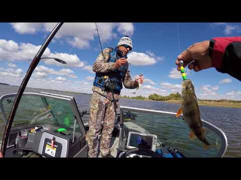 рыбалка на судака на волге видео 2016 год