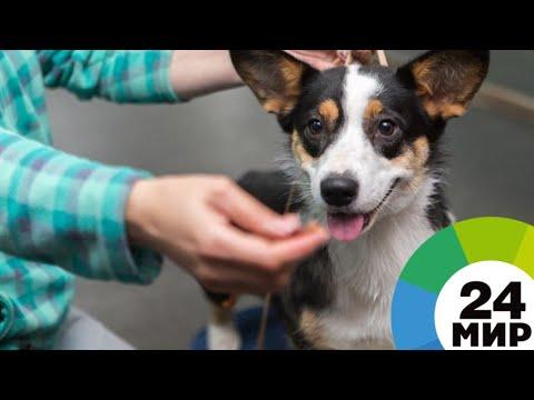 Право на заботу: Путин подписал закон об ответственном отношении к животным - МИР 24