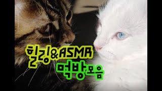 고양이가 좋아하는 음식(사료+간식+우유) 먹방모음 먹는소리 ASMR Cat eating video collection 猫を食べる映像集