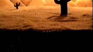 Vídeo 16 de Árbol
