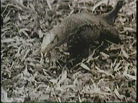 Reptiles y Anfibios 1