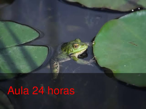 Reproducción en anfibios