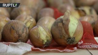 No More Tears: Japanese scientists develop onions that won't make you cry