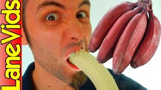 🇺🇸 WHAT DOES A RED BANANA TASTE LIKE? 🍌 | Americans Eating Red Bananas | LaneVids