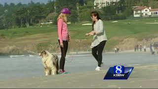 It's dogs, it's yoga  It's Doga!