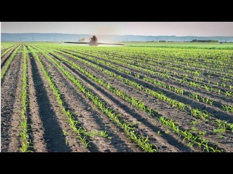 Clique e veja o vídeo Produção de Milho em Pequenas Propriedades - Plantio