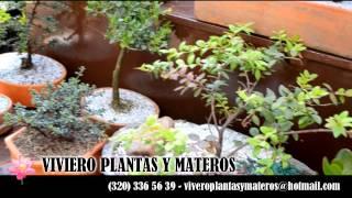 VIVERO PLANTAS Y MATEROS - Paseo Comercial Mediterraeo