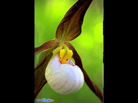 ilmoe.com 14310610 2 Ilmu Tajwid Bacaan Surah Al Fatihah Al Ustadz Muh