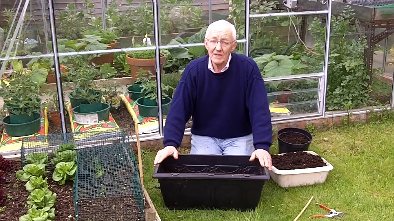 Container Gardening Ideas Growing Carrots Youtube
