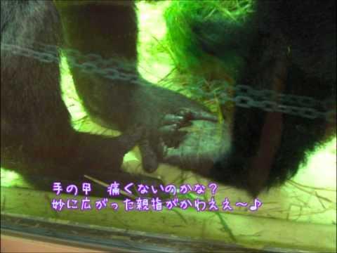 京都市動物園 20101116