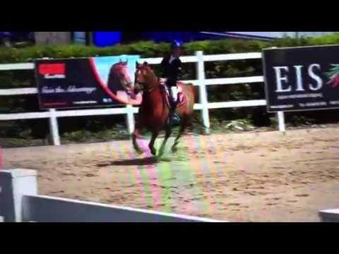 Rhys Williams - PARC Romeo- 135cm Premier