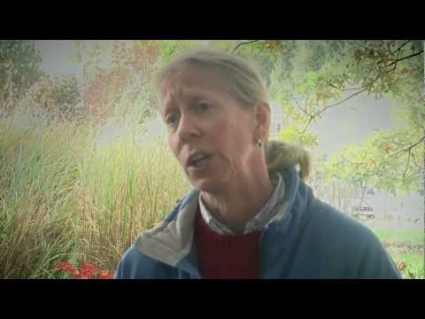 Dr. Sandra Brown on Climate Change in Rural Colombia | UBC Land and Food Systems