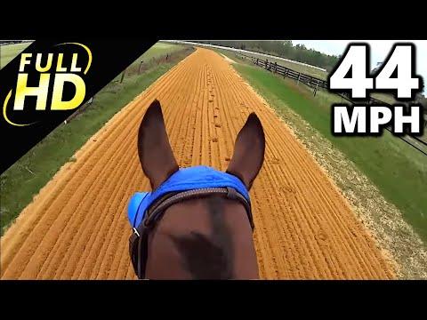 Jockey Cam Horse FAST Galloping 44mph. GoPro Hero 3