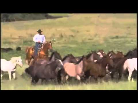 Haythorn Ranch Company - AQHA Best Remuda part 1