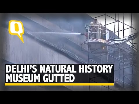 The Quint: Massive fire engulfs National Museum of Natural History