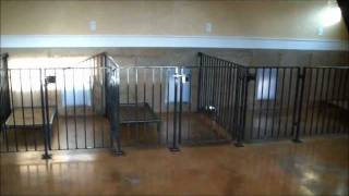Indoor Dog Facility Design Tips And Ideas