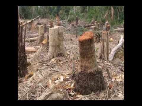 The Negative Effects of Deforestation - Making a Difference
