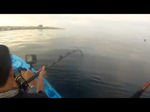 Fishing Diaries 19 - La Jolla Kayak Fishing - 33lb California Yellowtail