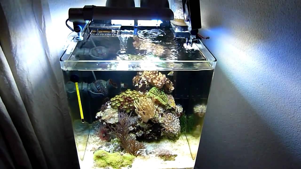 Dennerle 60 liter nanoriff youtube for Decoration aquarium 60 litres