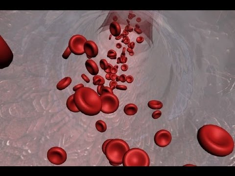 Animated Introduction to Cancer Biology (Full Documentary)
