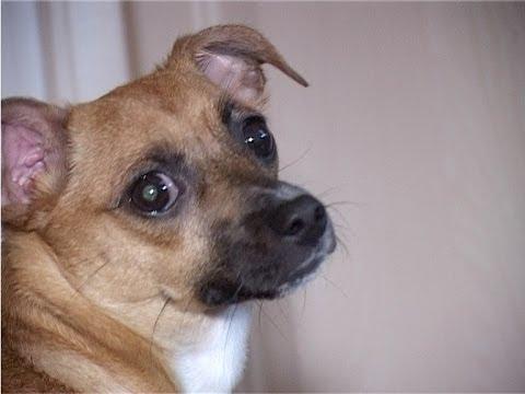 Download Lagu Мама выгнала из дома собаку. Собаку решил не оставлять мальчик. Ушел с ней из дома.... MP3 Free