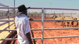 Livestock exports  - Official opening of the Broome cattleyards