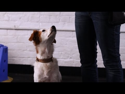 How to Teach Your Dog to Sit Pretty | Dog Tricks