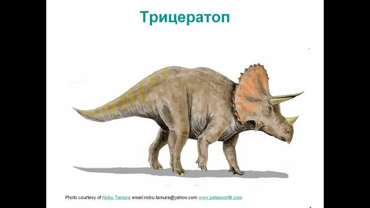 Динозавры в картинках