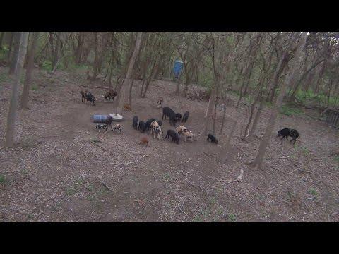 Feeder - Hunter