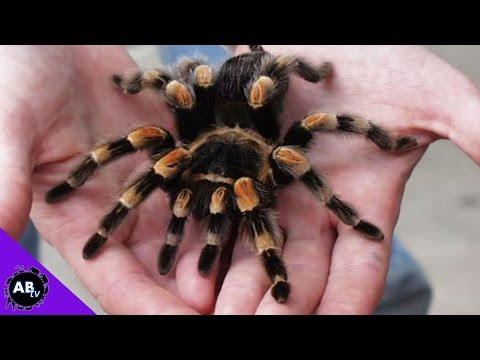 Weird Bugs I Live With! 5 Weird Animal Facts : AnimalBytesTV