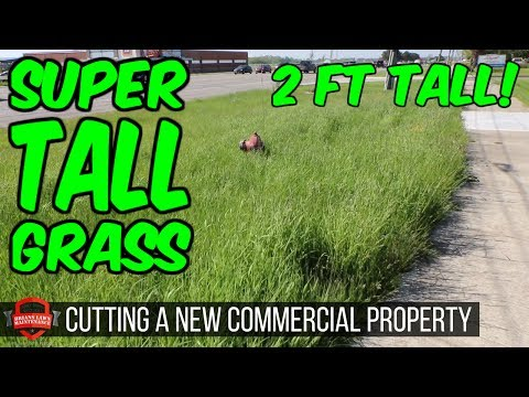 Mowing Our New Commercial Client - Super Tall Grass - Vlog Walk Through