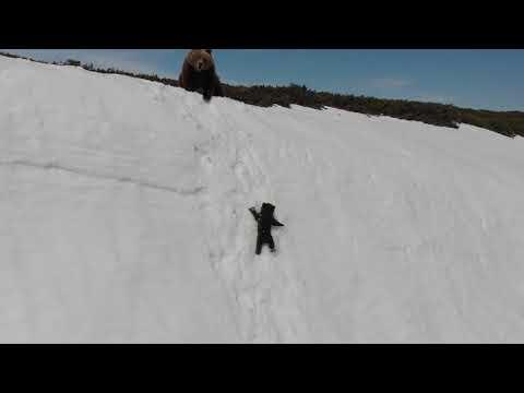 Спасение медвежонка на скальном обрыве