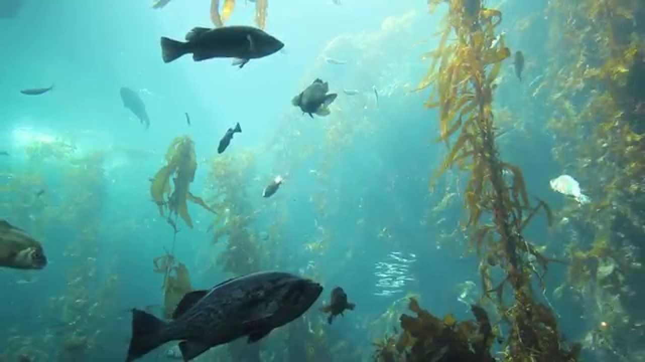 """""""Sonicquarium"""" Refreshing Underwater HD Nature Music Video ..."""