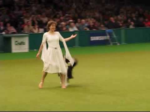Cruft s  dog dancing competition 2009