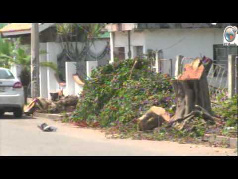 Sancionaran a quienes talen árboles sin permiso en Poza Rica ORTEGA