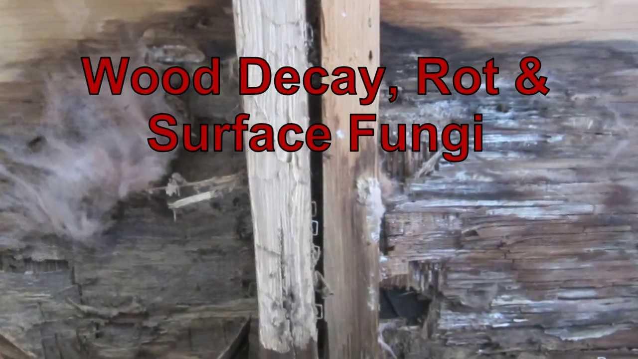 Wood Decay Rot Amp Surface Fungi Youtube