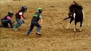 Wild Pony Races - Fort Dodge, IA