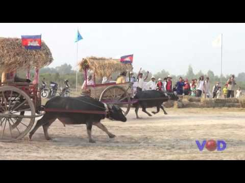 Cow and Buffalo Racing in Angkor Songkranta 2015