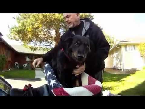 Dog Ryder Dog Riding On Motorcycle Motorcycle Pet