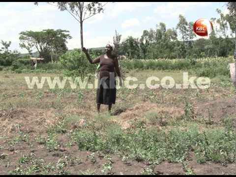Nyando farmers reap benefits of modern farming