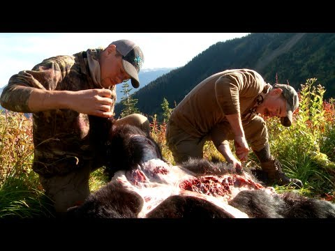 How To Skin And Butcher A Black Bear With Steven Rinella   Meateater