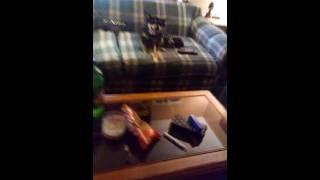 Criss Sixx free jams with 11 year old David PT 2
