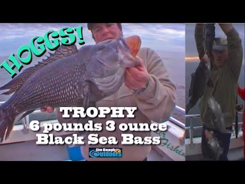How to catch Atlantic Black Sea Bass with Jim Brincefield Jim Baugh Outdoors TV  amazing Trophys