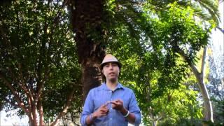 Cómo eliminar piedras de la vesícula