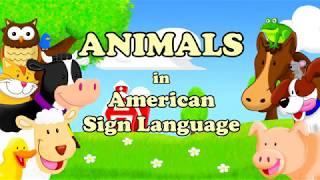 Animals in American Sign Language (Part 1)