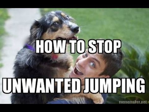 How to train your dog not to jump on you