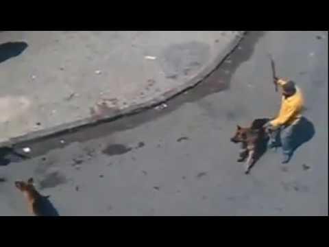 Собаки нападают на людей.Жестоко