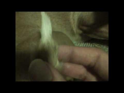 Paw-tail Chih-weenie