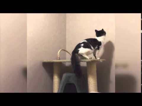 天井を突き抜ける忍者のような猫