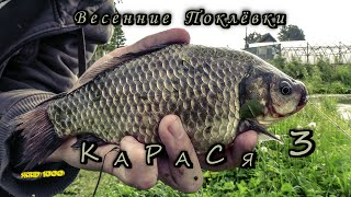 Карась.Весенние Поклевки Карася 3 (Fishing, angling, The bite crucian carp spring) 🎣